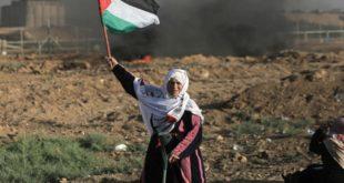 فلسطين فى الأخبار | حرب وجودية